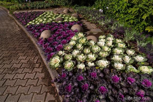 Декоративные цветники