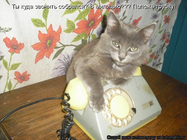 милая я тебе звоню