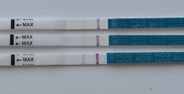 Может ли живот болеть при беременности в дни предполагаемых месячных