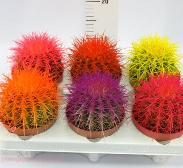 Как сделать цветные кактусы 117