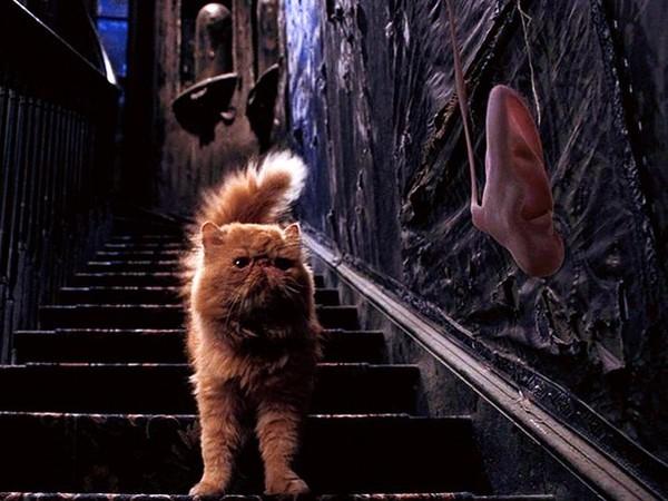 картинки кошка и гарри поттер идеале