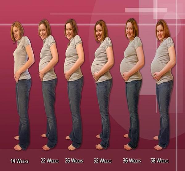 На каком сроке растет живот у беременных отзывы 53