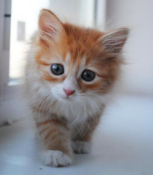 Все картинки кошек котят с надписями