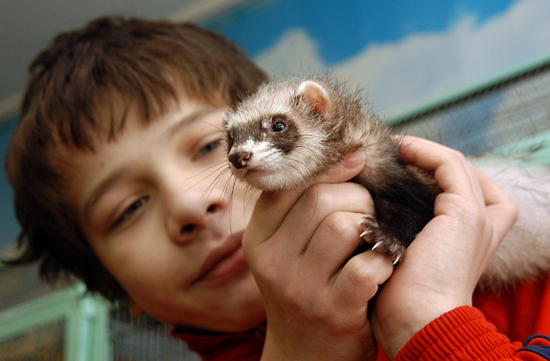 Экзотическое животное в домашних условиях 459