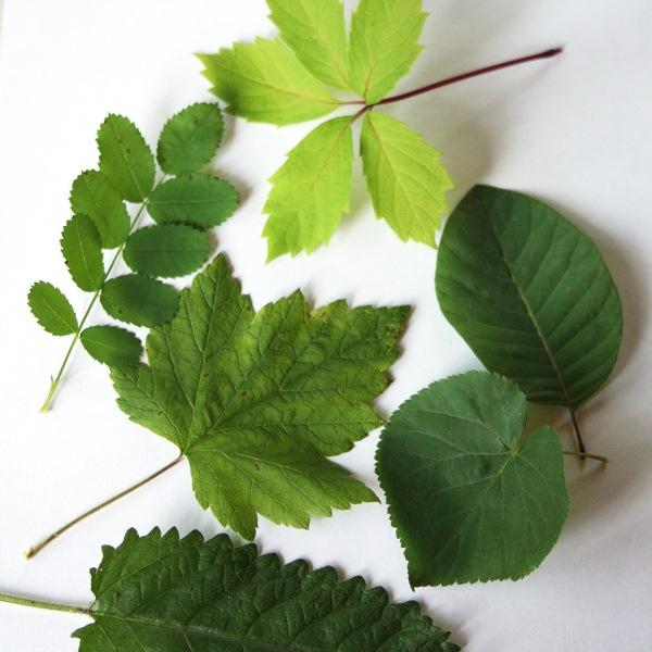 Выбираем несколько листьев