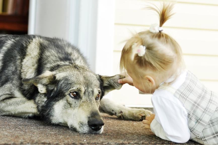 Как мы решили завести собаку