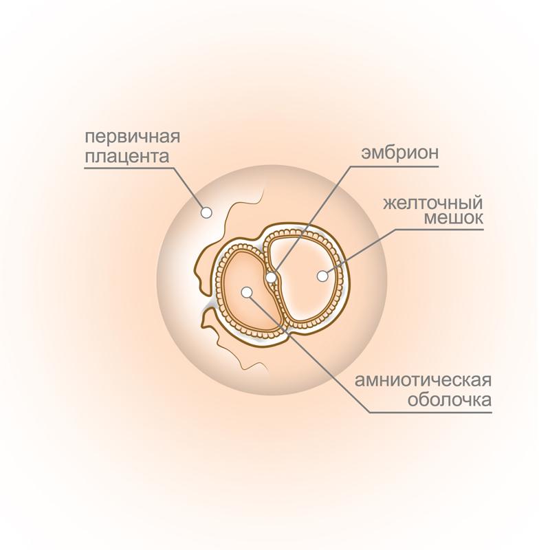 Беременность 5 недель симптомы 5