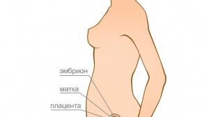 5 неделя беременности - ощущения в животе, что происходит с плодом, формирование эмбриона