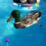 Джонни и Нибблс вместе плавают в бассейне