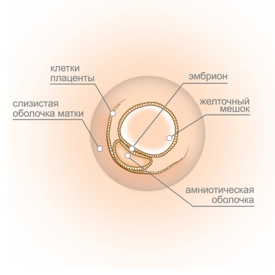 Беременность 3-4