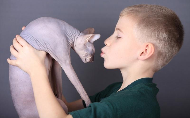 Питомец для ребенка-аллергика