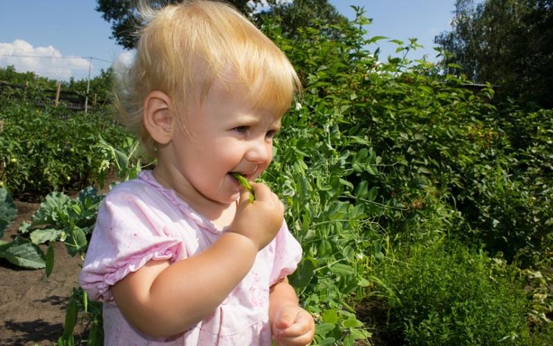 Опасности бабушкиного сада