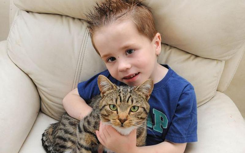 Кота номинировали на премию за спасение ребенка