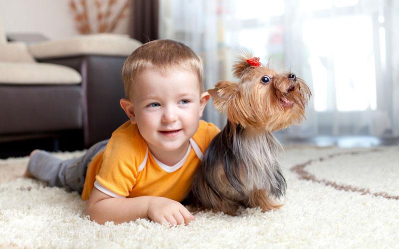 Собака помогла мальчику выздороветь после операции