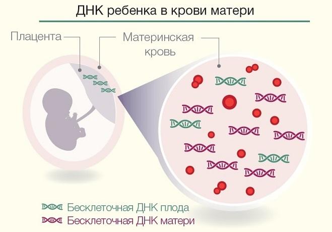 Инвазивный тест при беременности